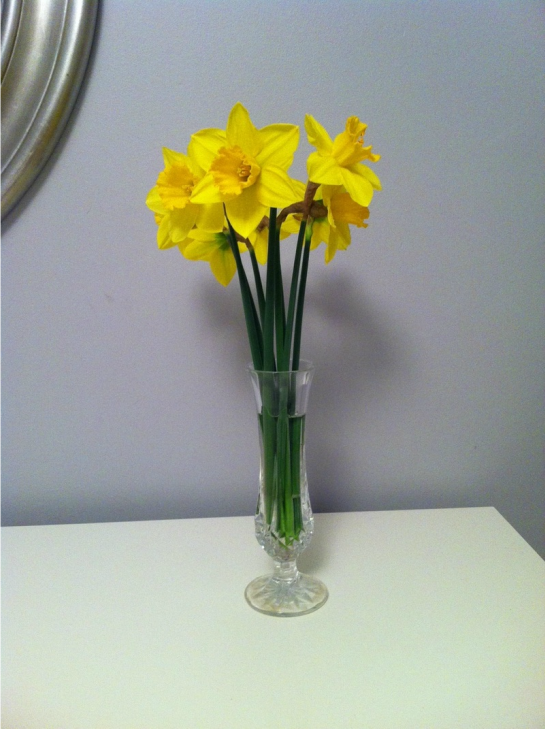 Frugal in Fairfield: Daffs from the garden