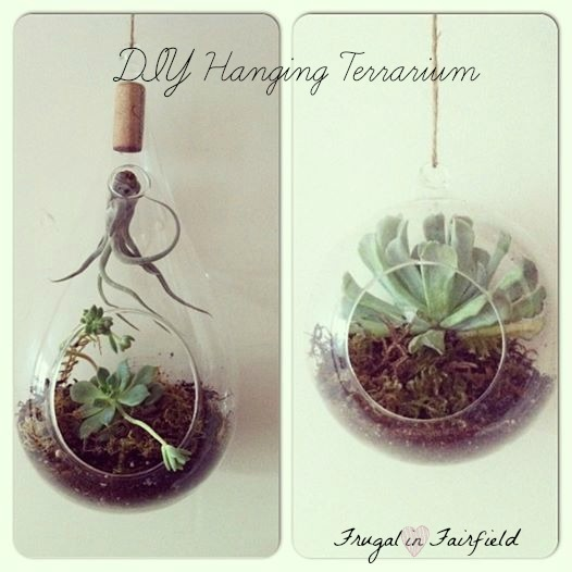 Frugal in Fairfield DIY: Hanging Terrarium